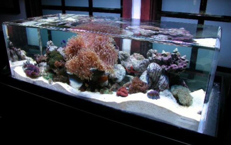 Hiasan Akuarium Elegan Untuk Ikan Anda Akan Gembira Paintonline Info